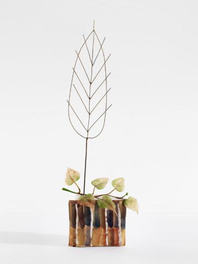 Foglia secca / Dry Leaf