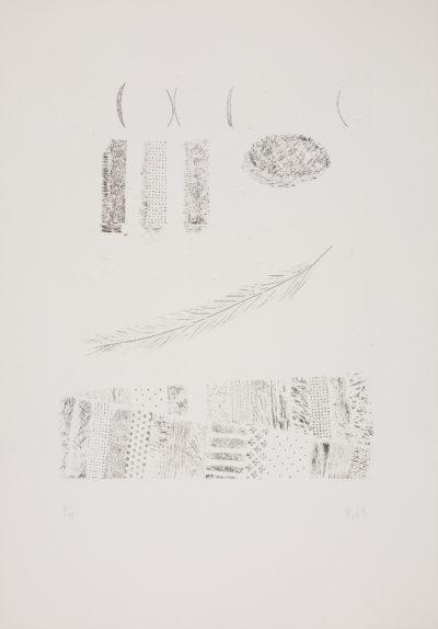 La piuma / The Feather
